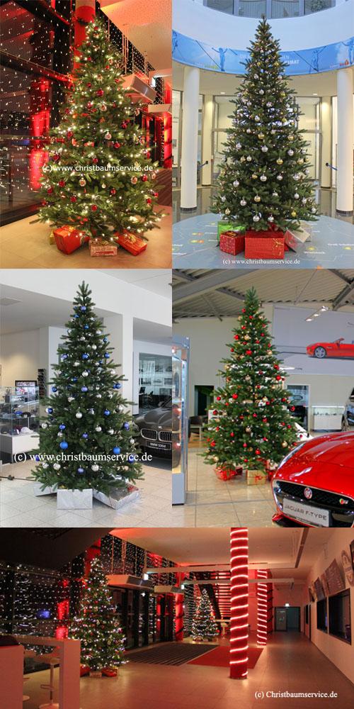 Weihnachtsbaum_vermietung_easy